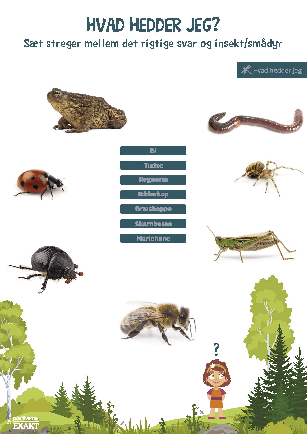 Insekter_og_smådyr_hvad_hedder_jeg_1
